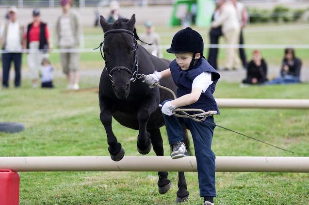 pony agility
